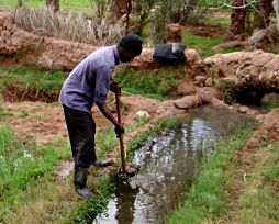 Irrigation in Algeria